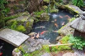 Los jardines con peces