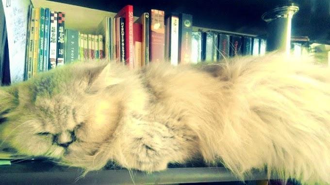 A história de uma gata - Mel