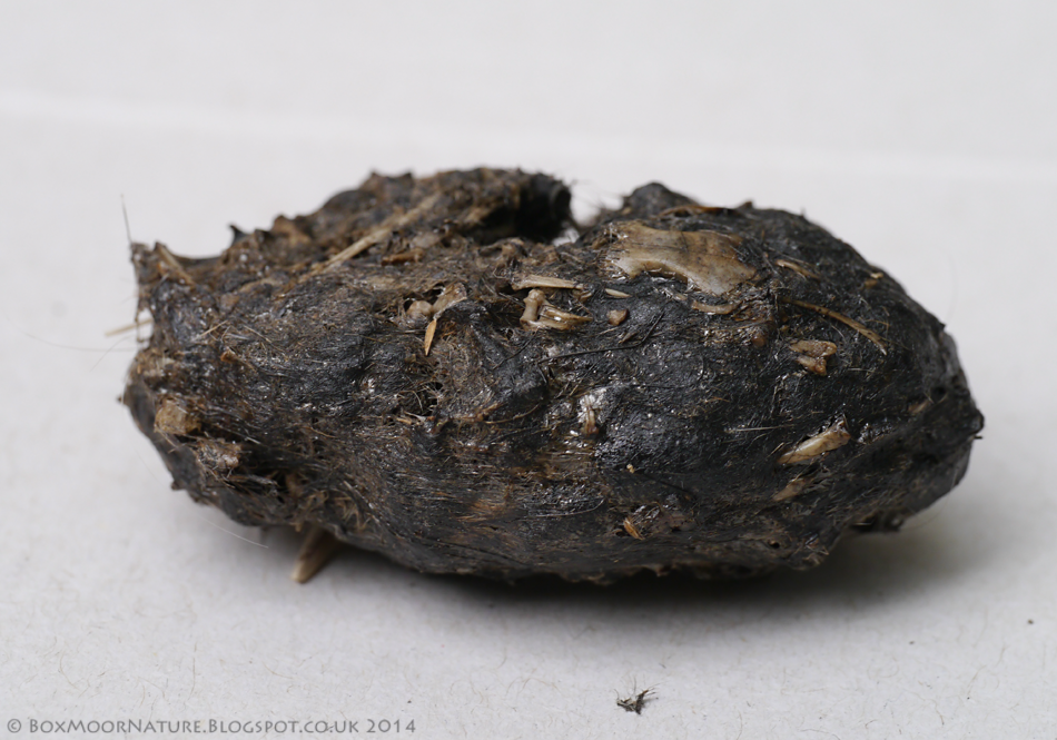Boxmoor, naturally...: Week 44: Barn Owl Pellet Dissection & Analysis