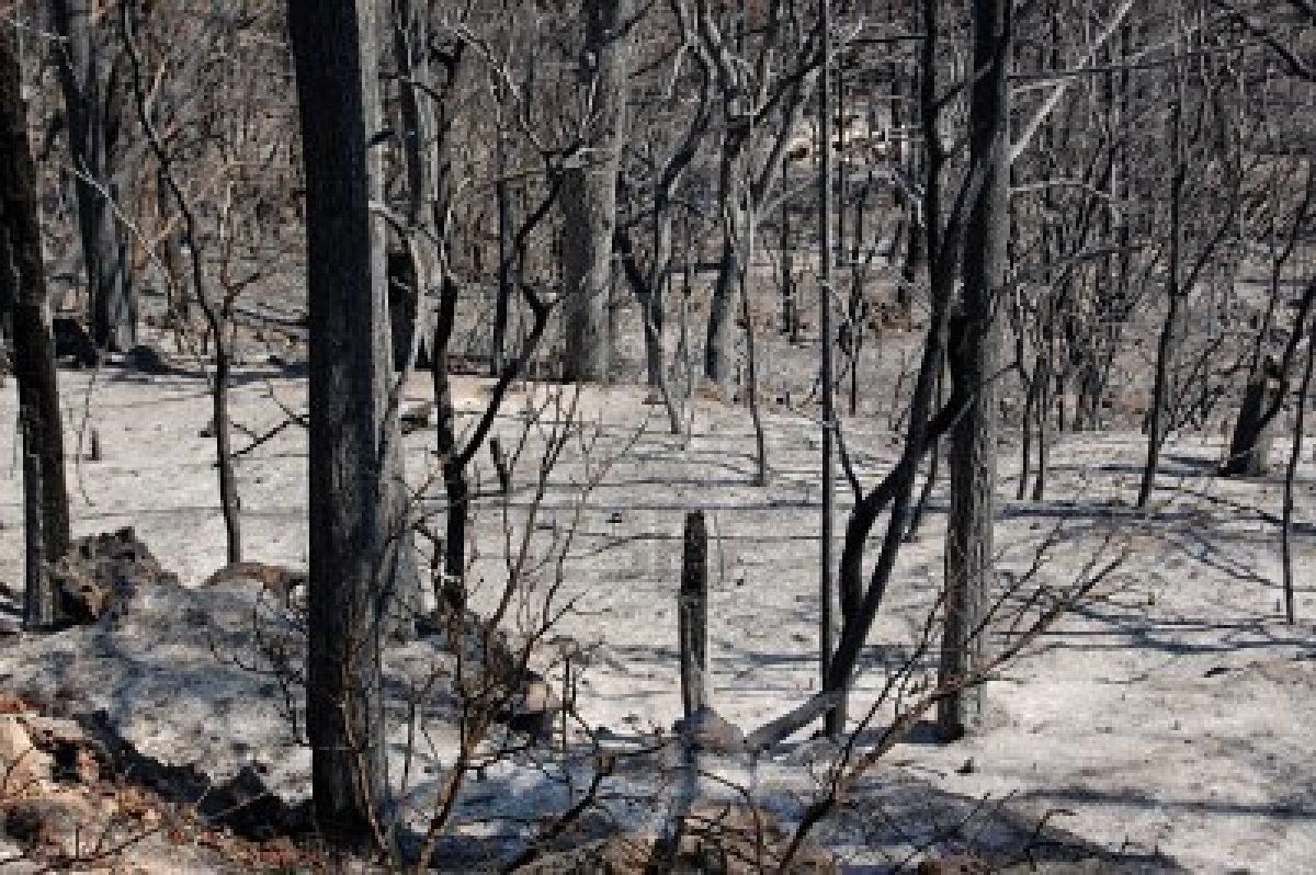 destruccion de los recursos naturales incremento de la erosion de