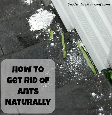 Natural Way To Get Rid Of Ants On Patio
