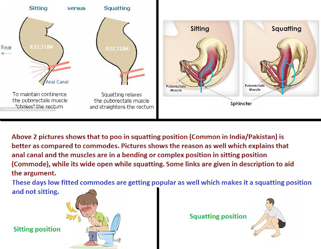 Sitting, Squatting, Toilet, Flush, Commode, Poo, Pee, West, Asia, Bowel Movement, Better, Comparison, Photo