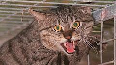 O Gato Feral