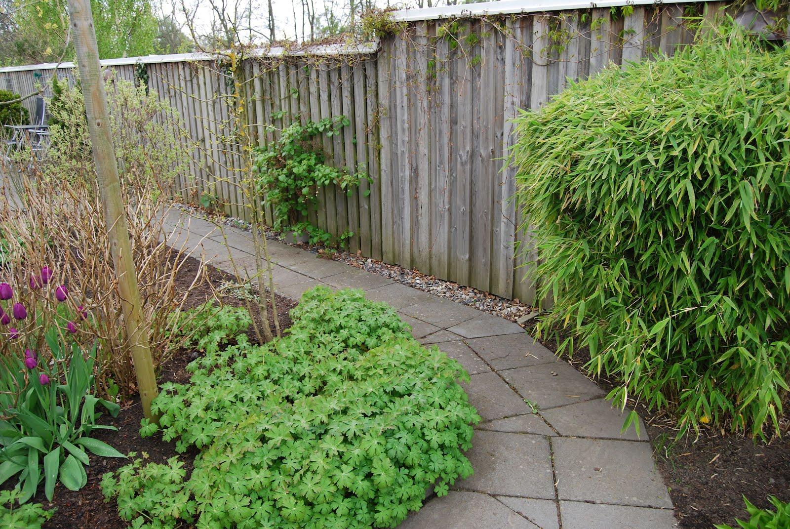 Trädgård plank trädgård : Cattis och Eiras TrädgÃ¥rdsdesign: Skapa väggar i trädgÃ¥rden II