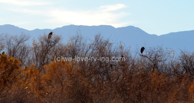 We can see four herons sitting in the trees