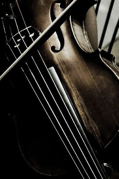 violin form - image collection no. 09  by linenandlavender.net - http://www.pinterest.com/linenlavender/ll-collection-no-09/