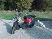 2006 Honda Ruckus