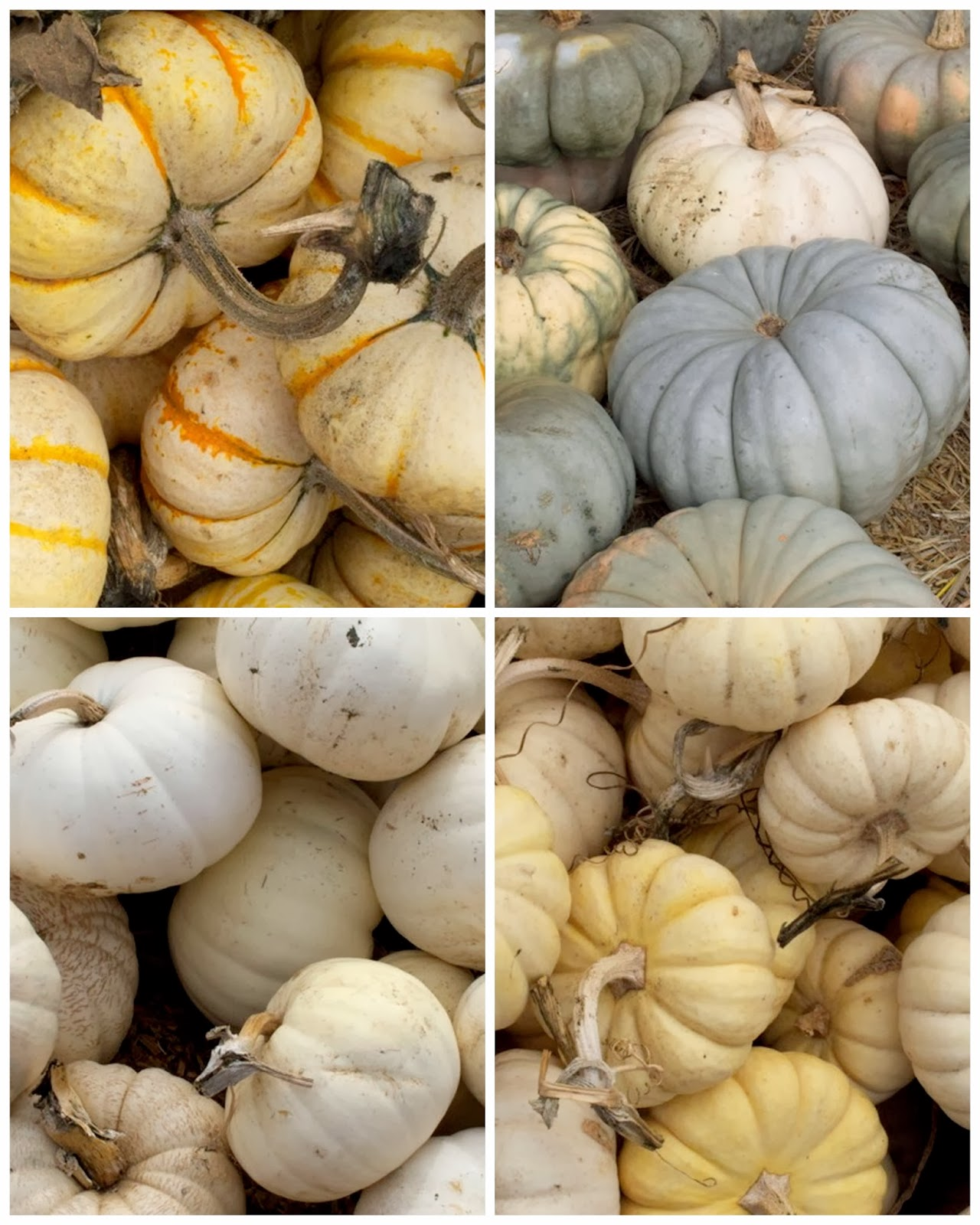 Pumpkins for October and Halloween 6