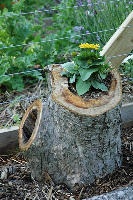 An Article On How To Turn Timber Logs Into Planters:  Http://www.ehow.com/how_12097962_turn Logs Planters.html