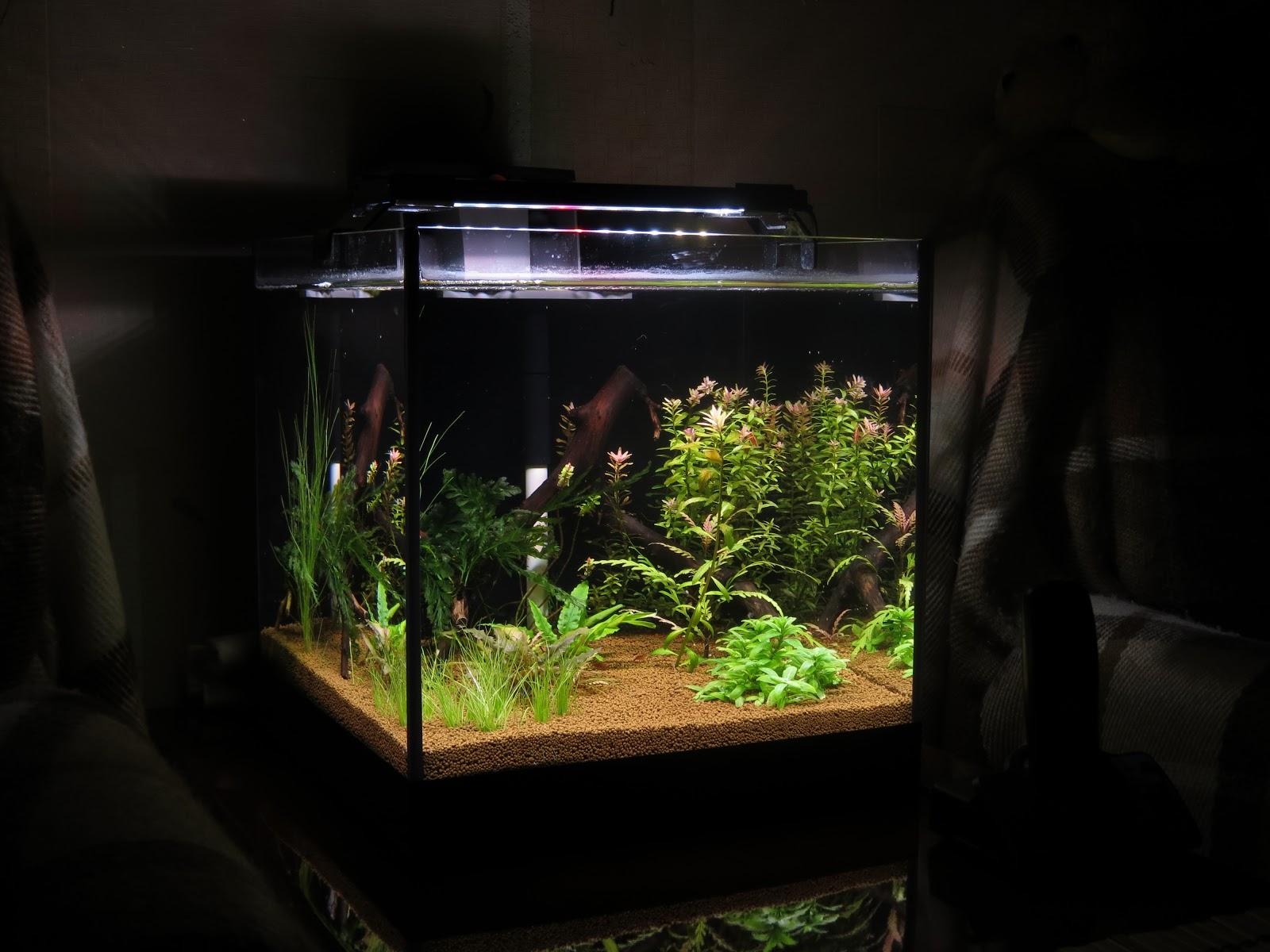 Донный фильтр в аквариуПодушки для любимых своими