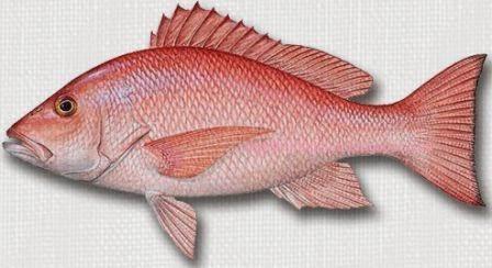 Tips Dan Trik Mancing Ikan Kakap