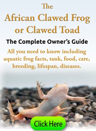 African Clawed Frog Owners Guide!