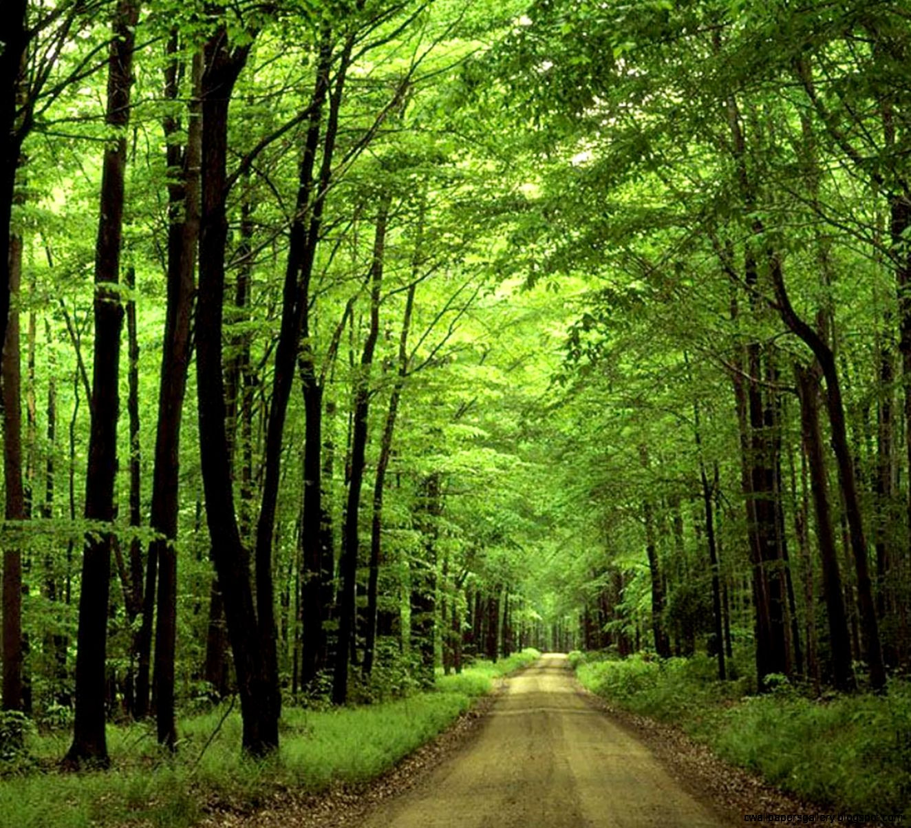 Download Forest Green Hd Nature Wallpaper  Full HD Wallpapers