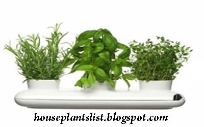 House plants list june 2012 - Healthiest houseplants fresh air delight ...
