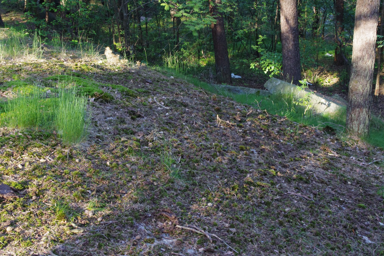 What is the soil in the forest steppe Type, features 60