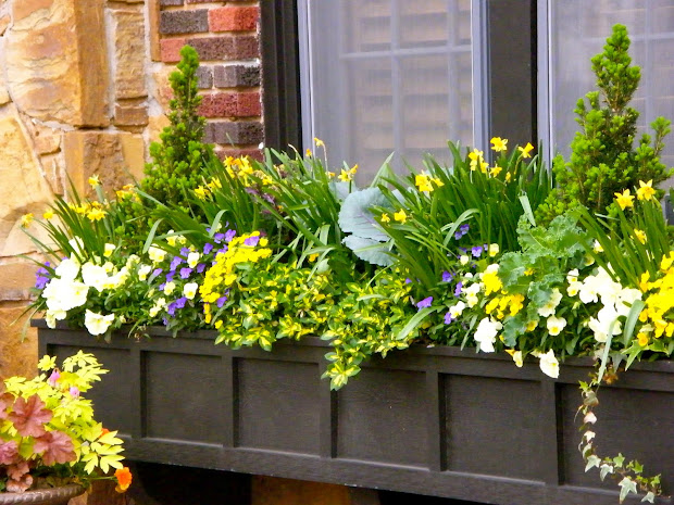 Outdoor Window Flower Boxes
