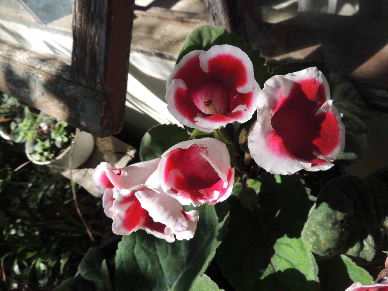 arreglos florales plantas ornamentales