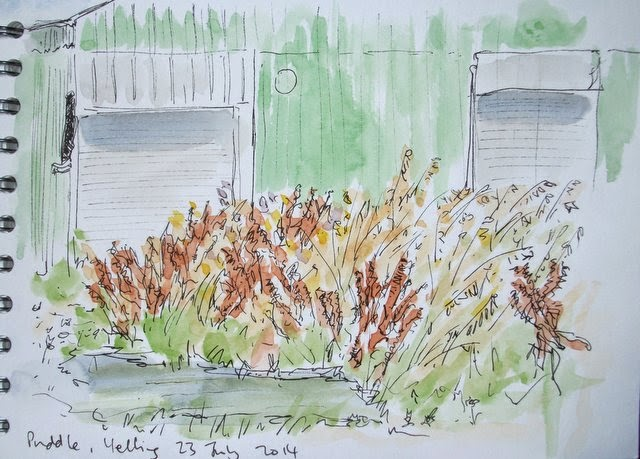 Ink and watercolour sketch, plants on field edge