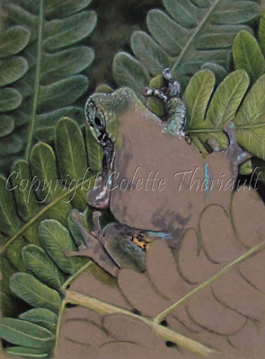 Update of Frog painting of North American Wildlife by Colette Theriault