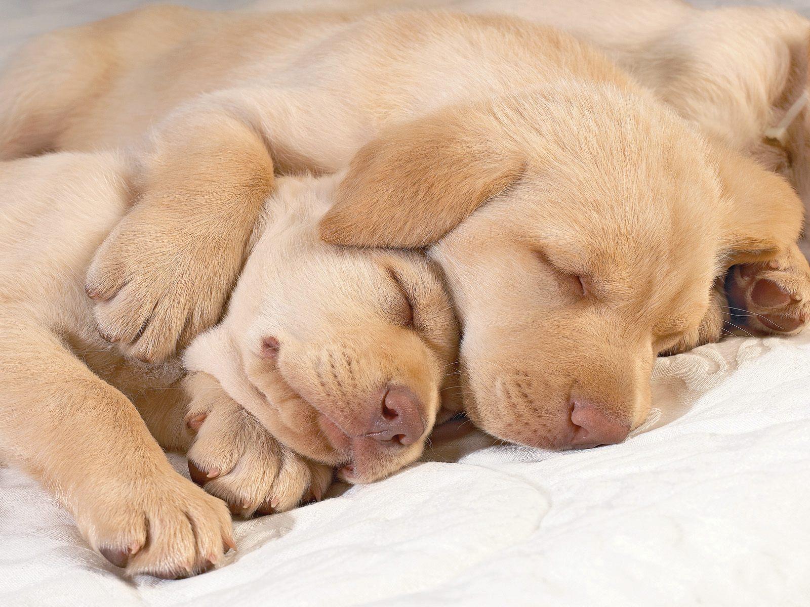 http://3.bp.blogspot.com/-CaVFIBSf4oA/UJIW6xuQKiI/AAAAAAAABHo/kf7ziw8lyg8/s1600/Cute+Puppies+Sleeping.jpg