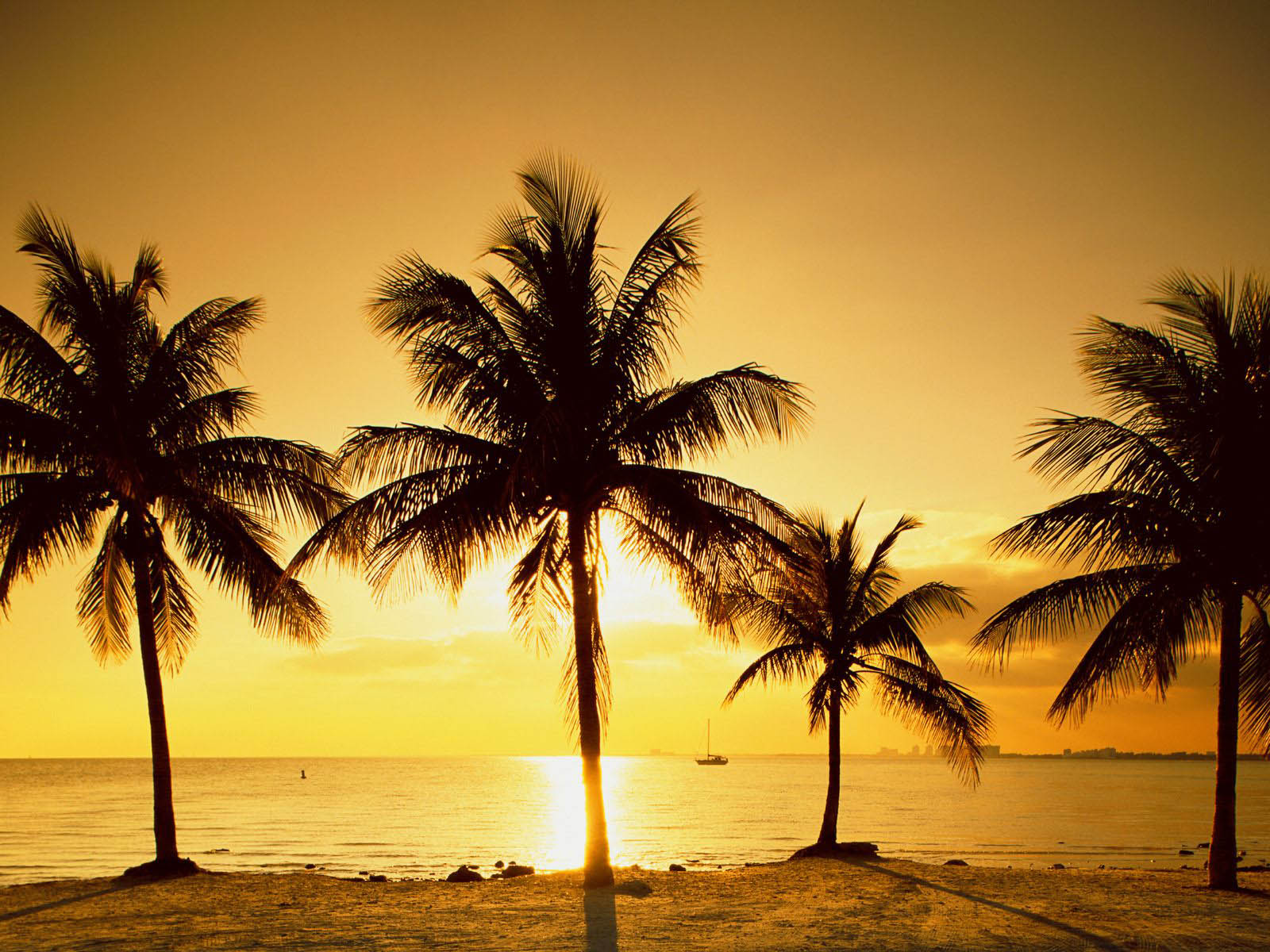wallpapers palm trees wallpapers