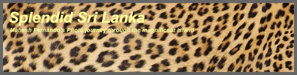 Splendid Srilanka