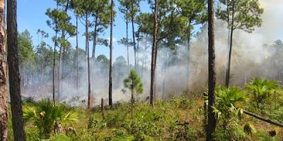 Incendio en bosques de Abaco2