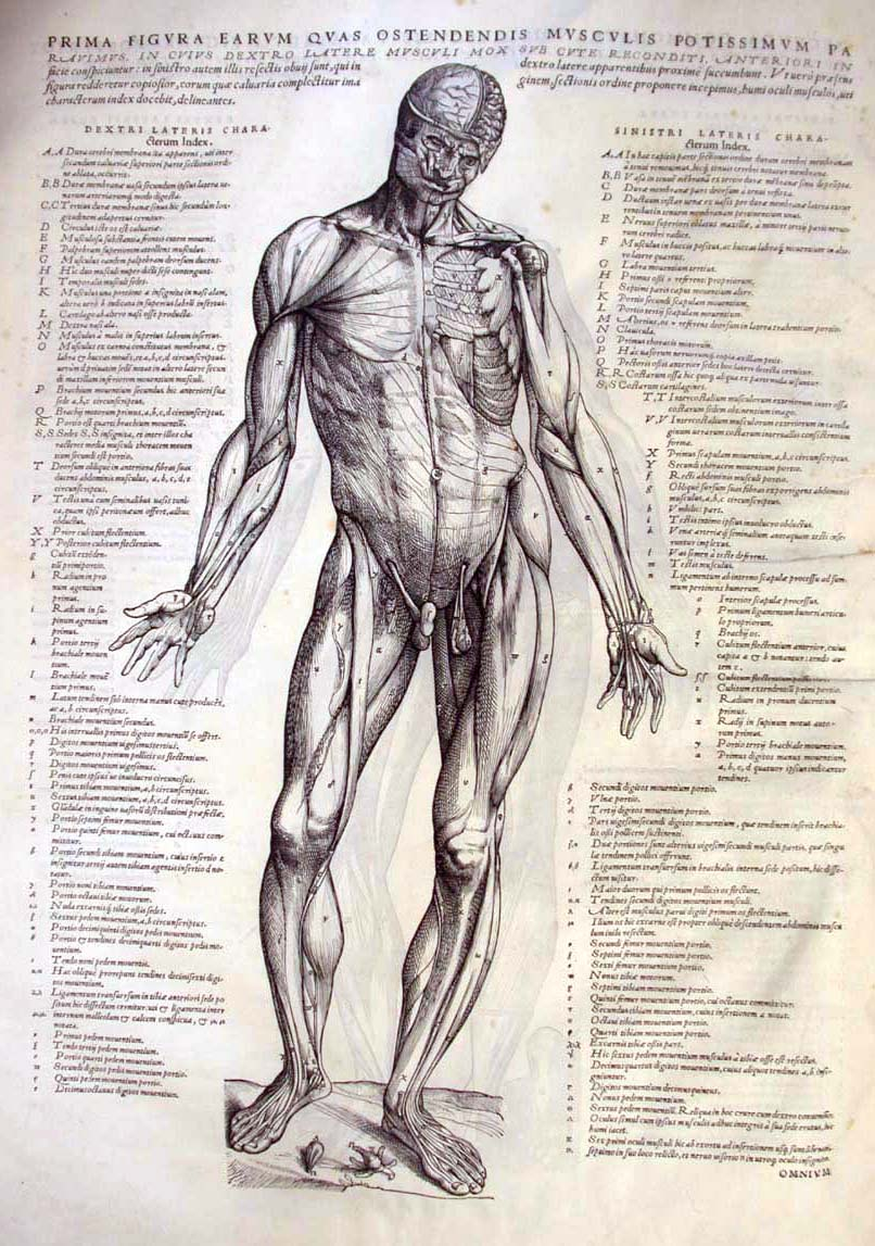 Marie Dauenheimer\'s Art and Anatomy Blog: Andreas Vesalius, Father ...