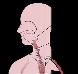 gambar bagian tenggorokan