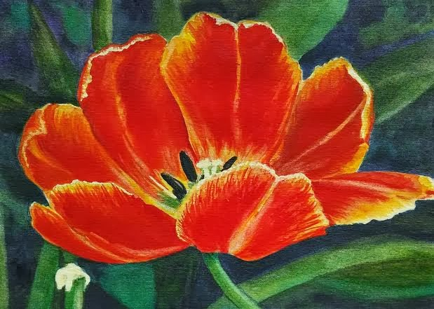 Red Poppy (watercolor)