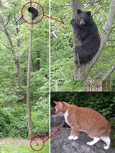 urso medroso subiu na arvore por causa do gato do chuck norris