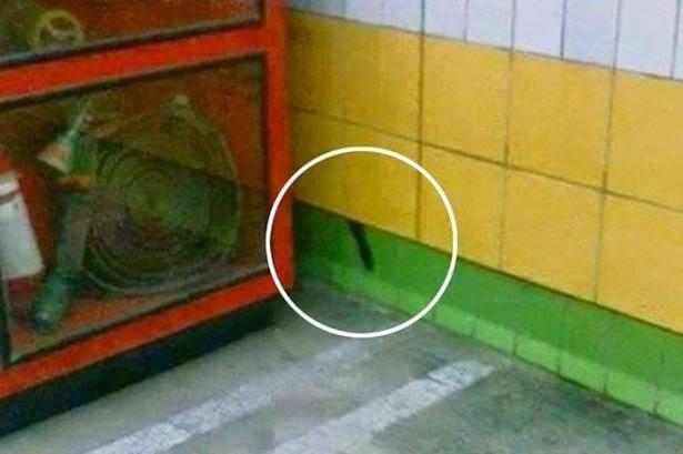 Foto ekor Biso yang mengundang keprihatinan banyak orang