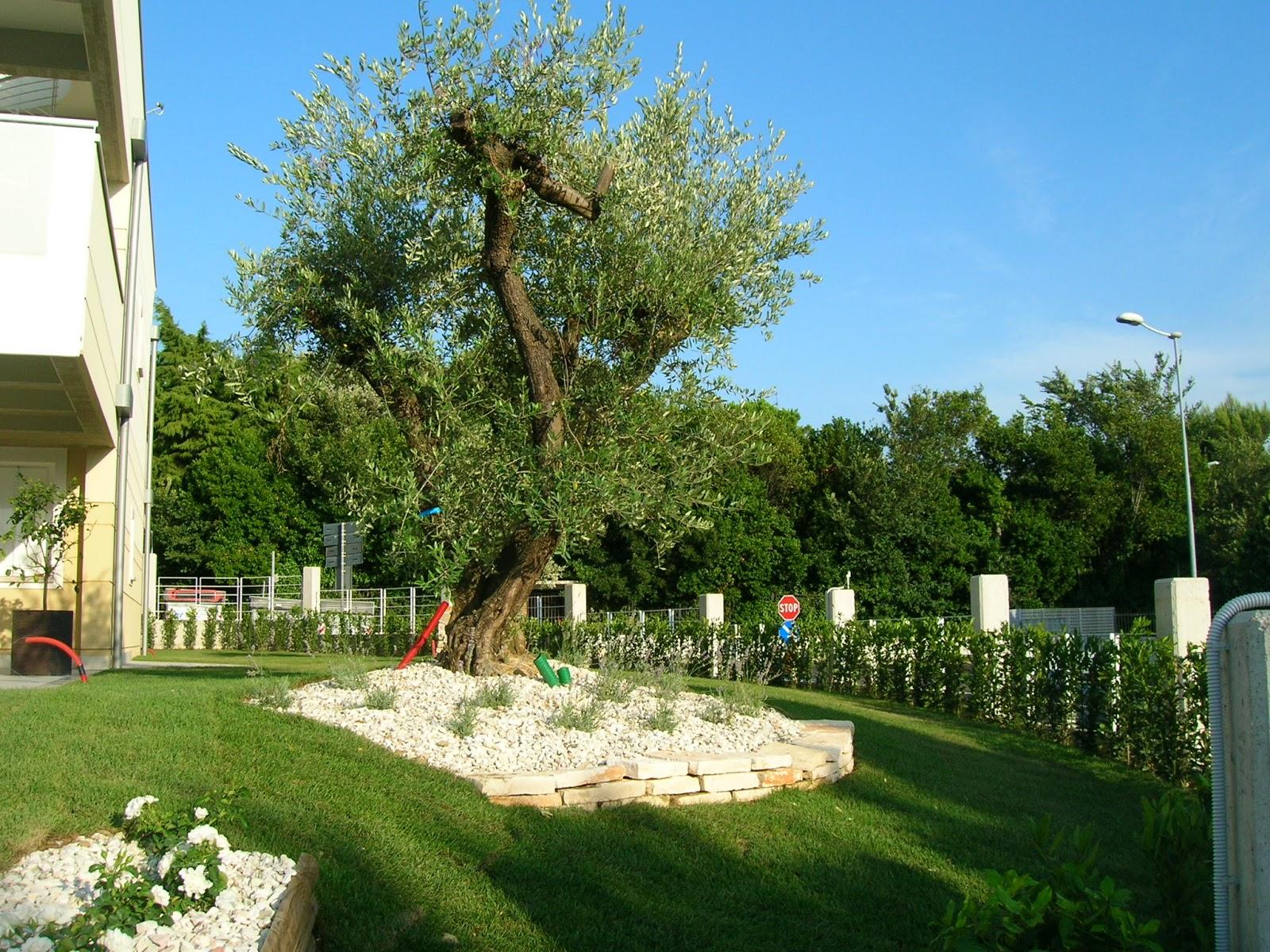 Dr riccardo frontini il sistema progetto intelligente for Ristrutturare il giardino