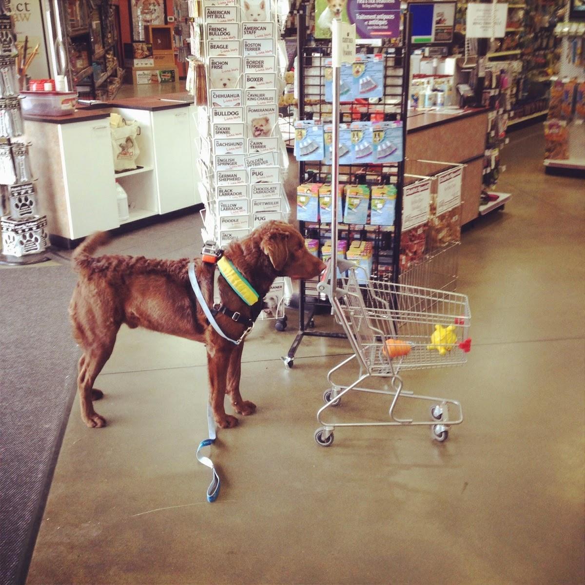 Dog-Friendly Shopping in Canada