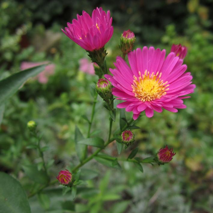 Fleurs roses - http://spicerabbits.blogspot.fr/