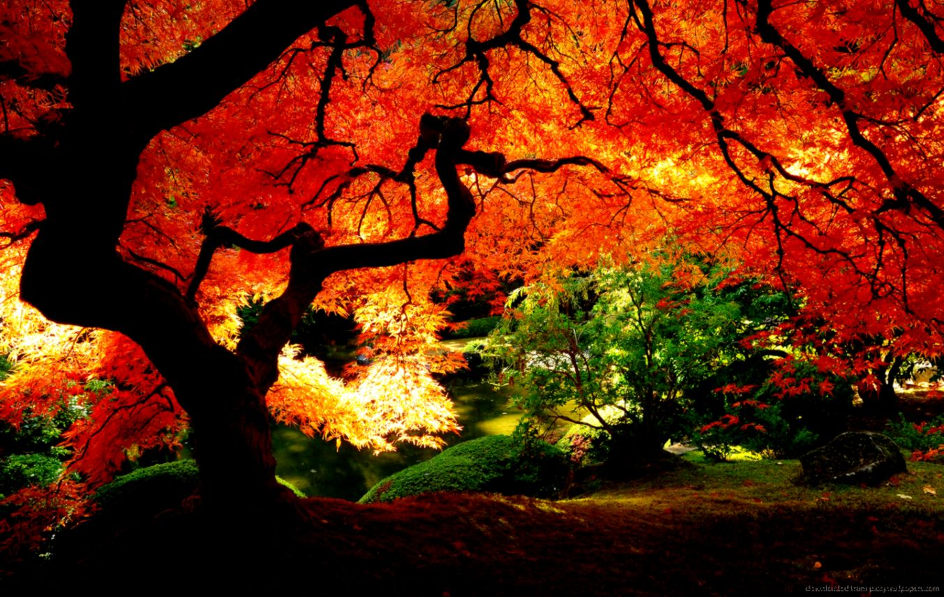 Download 1440x900 Beautiful Red Autumn Tree Wallpaper