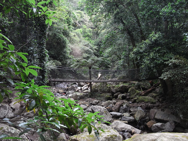 Swing Bridge, Minnamurra Rainforest Walk