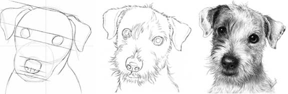 Contour Line Drawing Of A Dog : Some talk about art