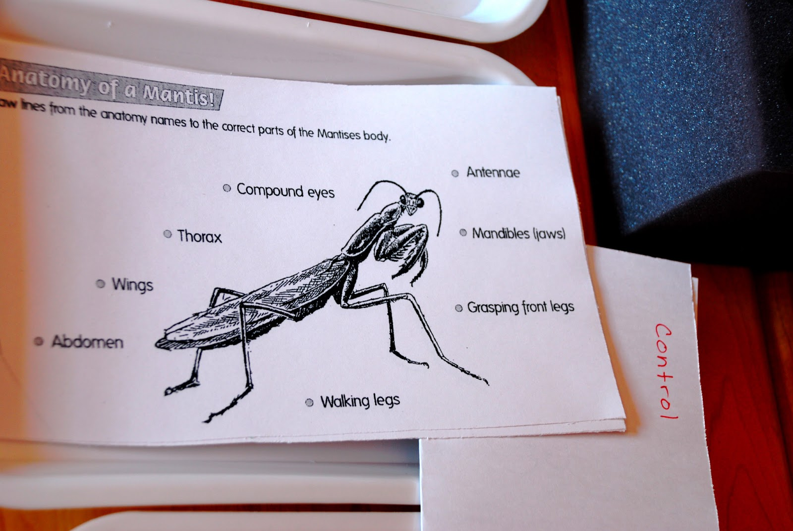Letting It Rot: Studying Insects! Enter: Praying Mantises