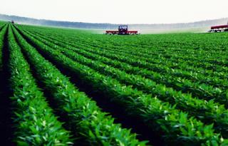 Pengertian dan Jenis-jenis Tanaman Pangan dan Hortikultura Terlengkap