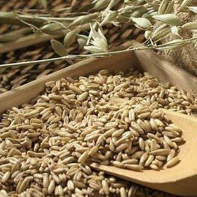 Ljekovito bilje, Liječenje biljem, Biljni lijekovi