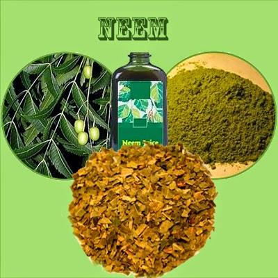 cilt sağlığı, Cilt Bakımı, cilt lekesi, Neem, saç bakımı, Neem Çay Tarifleri: