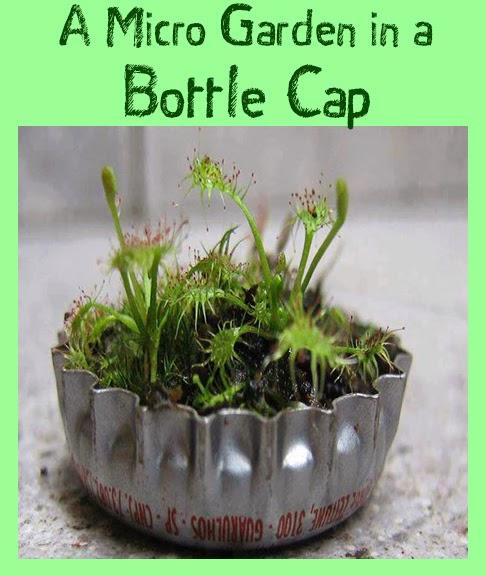 A micro-garden in a bottle cap.