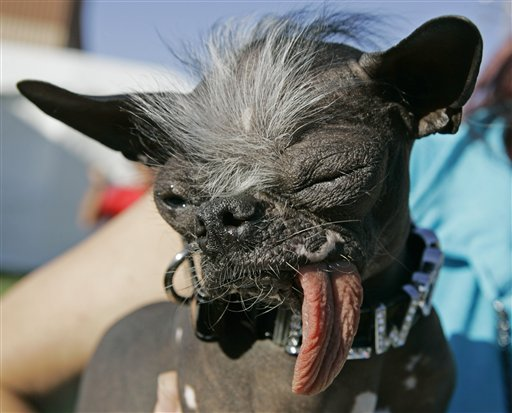 Ugly looking dogs - photo#6