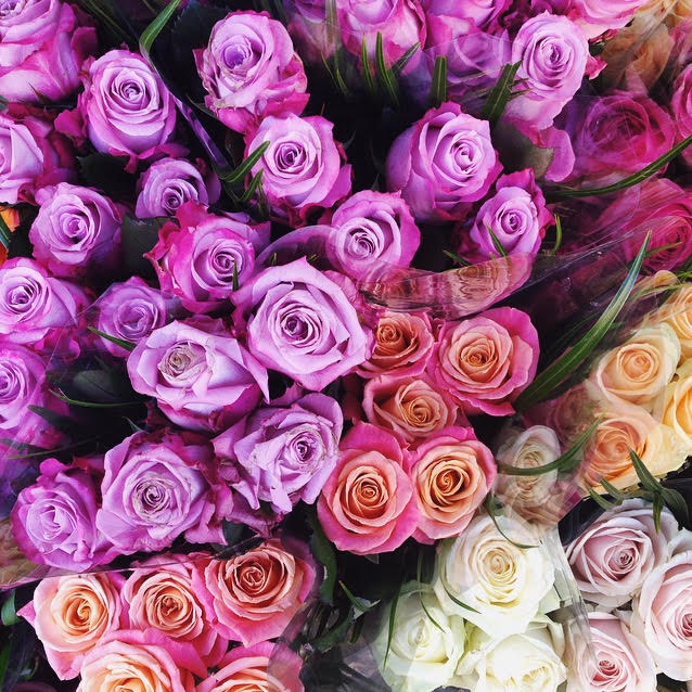 Pastel Coloured roses at the Columbia Road Flower Market