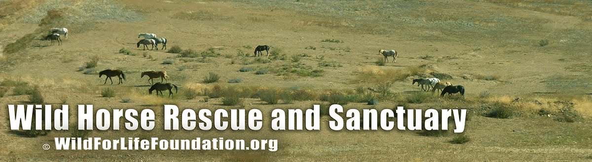 WFLF Wild Horse Rescue and Sanctuary