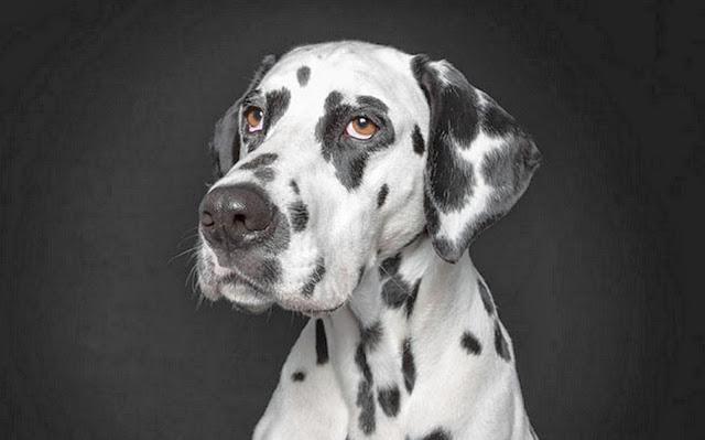 fotografias-de-perros