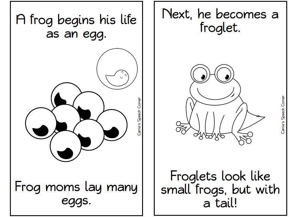 Carrieu0026#39;s Speech Corner: Life Cycle of a Frog