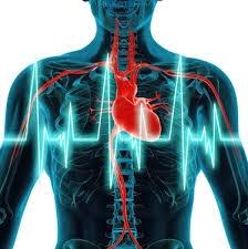 Cara Alami Mengobati Jantung Berdebar Kencang