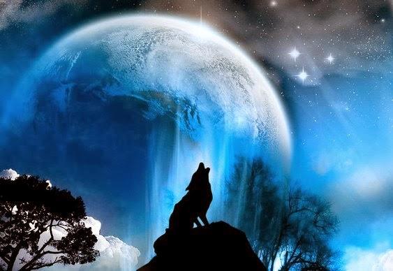 Wolf Dream Catchers Drawings Desabafos Poético...